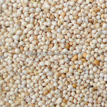 white millet for birds food