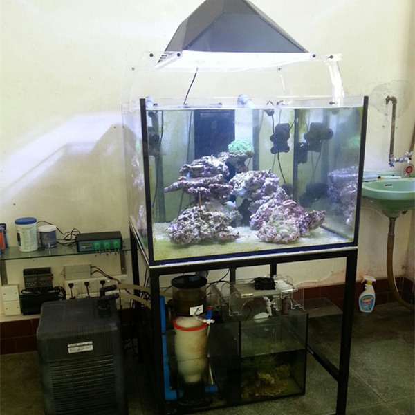 Home Decorative Coral Reef Fish Tank For Sale