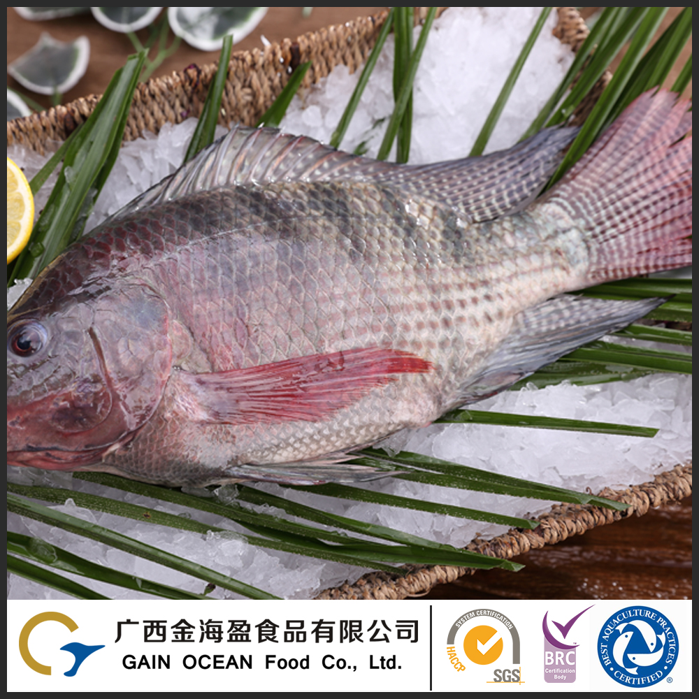 Storage On or below -18 Degrees Frozen Sea Food Tilapia Whole Fish