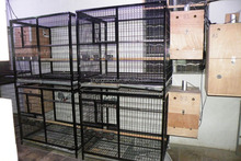 China supplier removable kennel parrot kennel