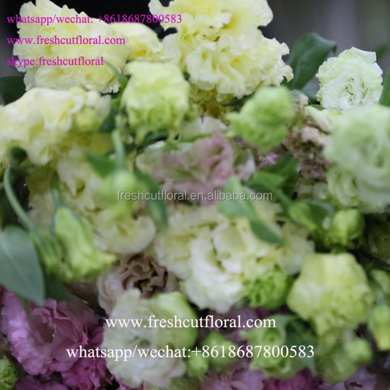 Meilleur en ligne en gros coup es fra ches eustoma nom - Fleurs coupees en gros pour particulier ...