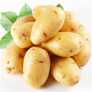Super market using supplier fresh holland potatoes
