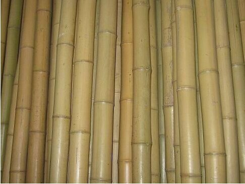 Bamboo canes/bamboo poles for agriculture use