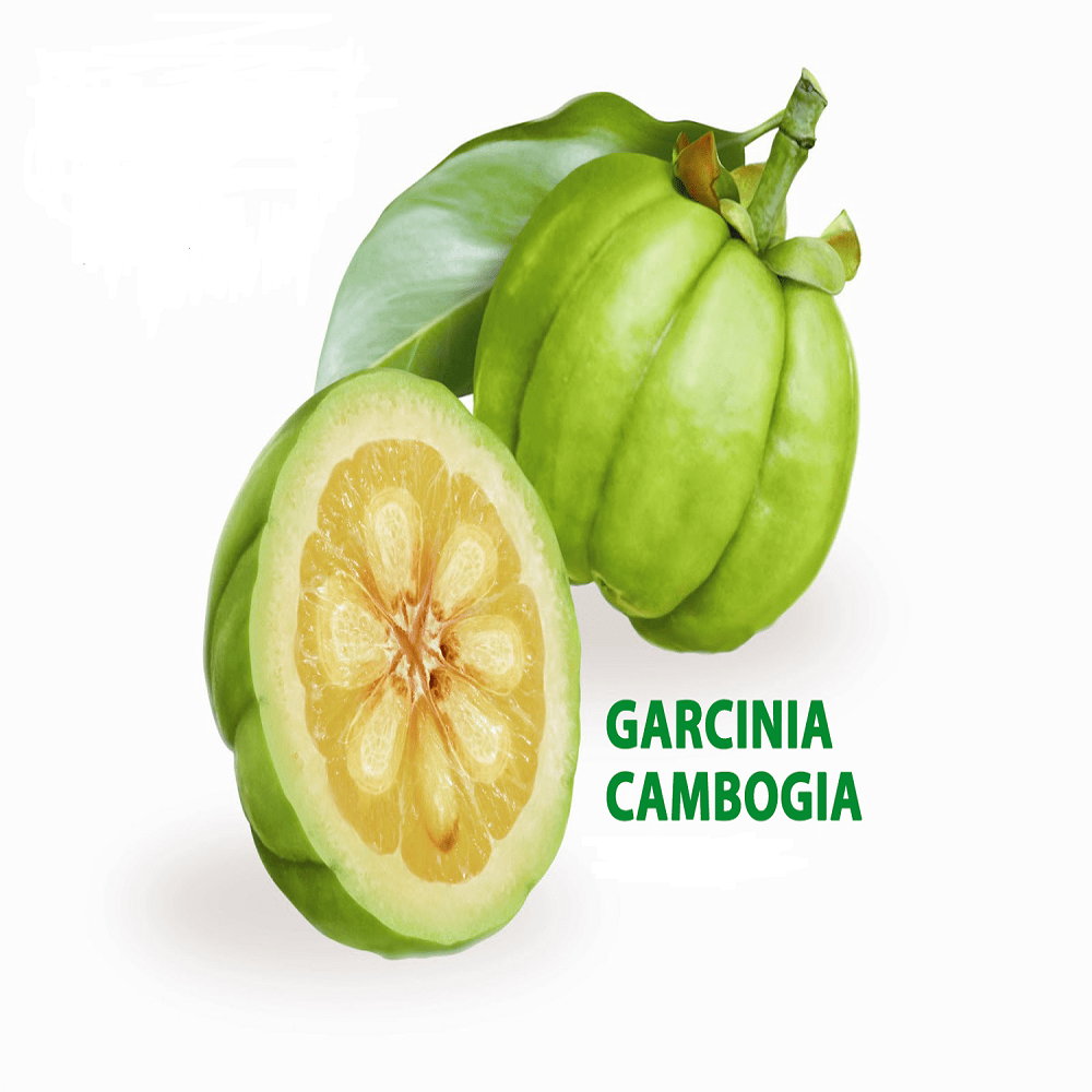 Halal Garcinia Cambogia Fruit Extract 90 Hca For Weight Loss