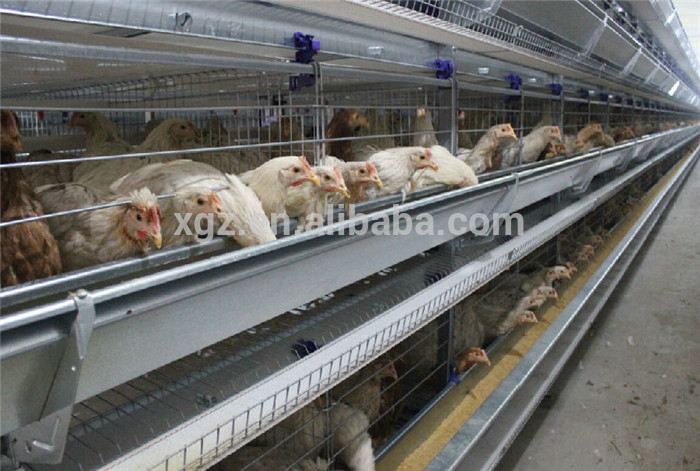Prefab Poultry Farm Construction Broiler Poultry Shed Design
