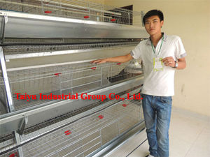 Battery cage for Nigerian poultry farm ( welcome to talk with our local agents )