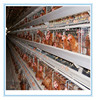 Poultry farming equipment galvanise cage /galvanise breeding cages for layers