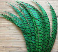 Natural Reeves Pheasant Tail Feathers Dyed Pheasant Feathers