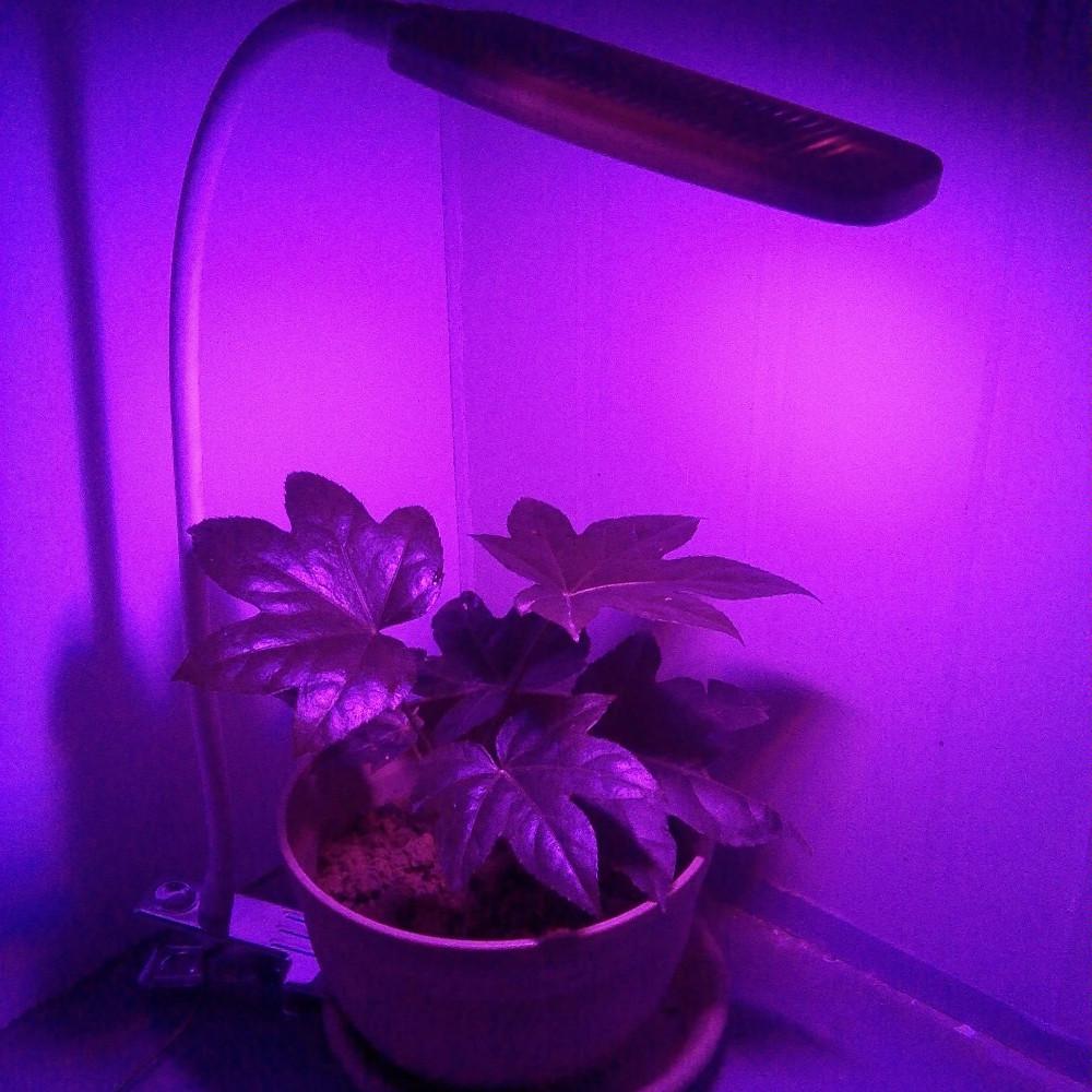 Led Plant Grow Light Red Blue Lamp 4w Led Grow Light Buy Best Led Grow Lights 2015 4w Led Grow