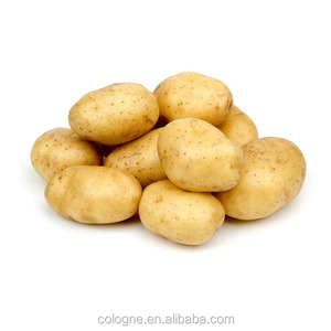 russet potato importer in malaysia/russian importers of potato price for sale