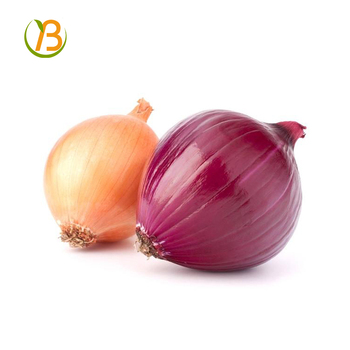 indian onion price for kuwait/indian onion buyer/indian onion, View indian  onion price for kuwait, BEST Product Details from Henan Best Agricultural