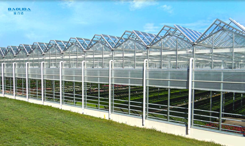 Agriculture Strong Steel Pipe Greenhouse For India