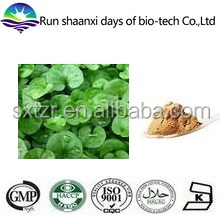 Natural Herba Lysimachiae Extract / Christina Loosestrife Herb Extract Powder / Lysimachia christinae Hance. P.E.
