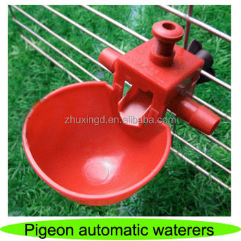 Hot sale pigeon waterer, automatic pigeon feeder, pigeon automatic waterer