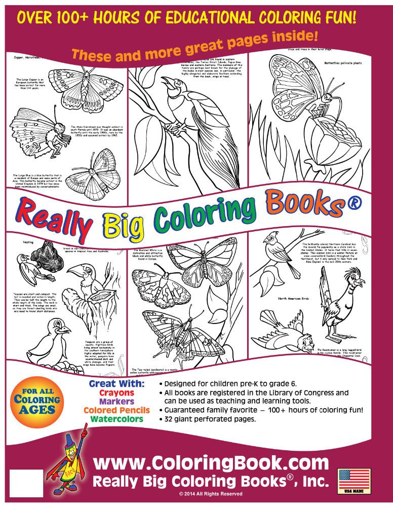 الفراشات والطيور كبيرة حقا كتاب التلوين الكتب معرف المنتج