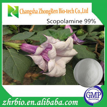 High quality and lowest price 100% natrual Scopolamine 99%
