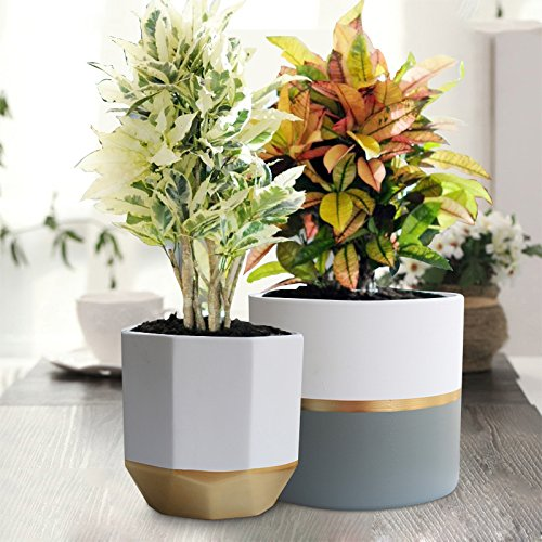 Cheap indoor pot garden find indoor pot garden deals on line at get quotations white ceramic flower pot garden planters 65 pack 2 indoor plant containers with gold mightylinksfo
