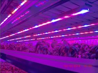 DC12V IP68 full spectrum 4ft hydroponic greenhouse LED grow light 15/30/45/60W