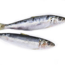 Good price frozen seafoods frozen sardine fish for canned