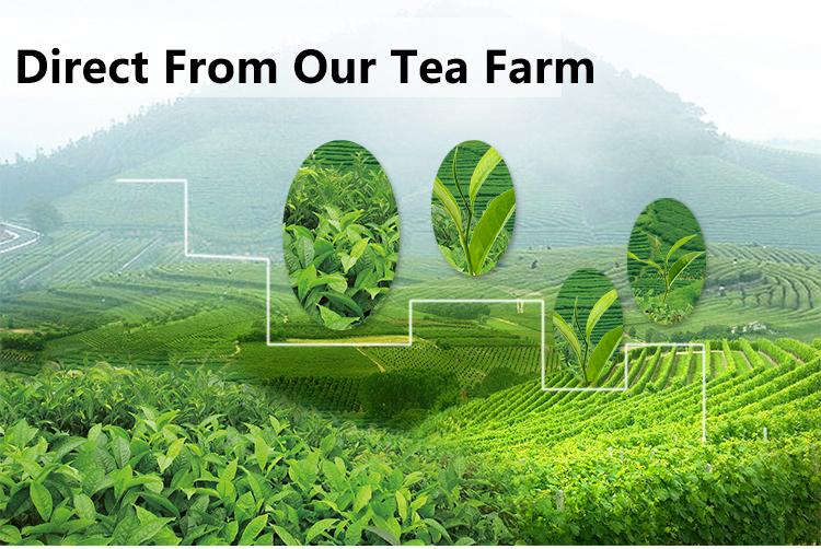 Organic China Kitkat Runming Tea Fda Spring New Loose Leaf Sencha Green Tea  Herbal Tea Drink Dropship Flecha Quality - Buy Spring Sencha Green