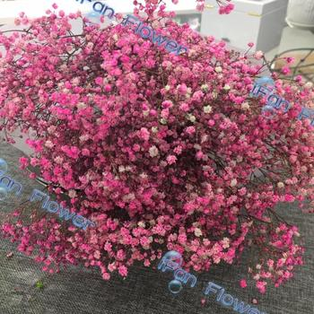 Brand new high quality preserved baby breath flowers wholesale brand new high quality preserved baby breath flowers wholesale natural flowers mightylinksfo