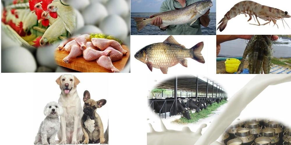 100% pure organic bulk spirulina powder feed grade for animals feed