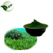 GMP 100% Pure Natural Light Green Powder UV 10% fucoxanthin seaweed extract