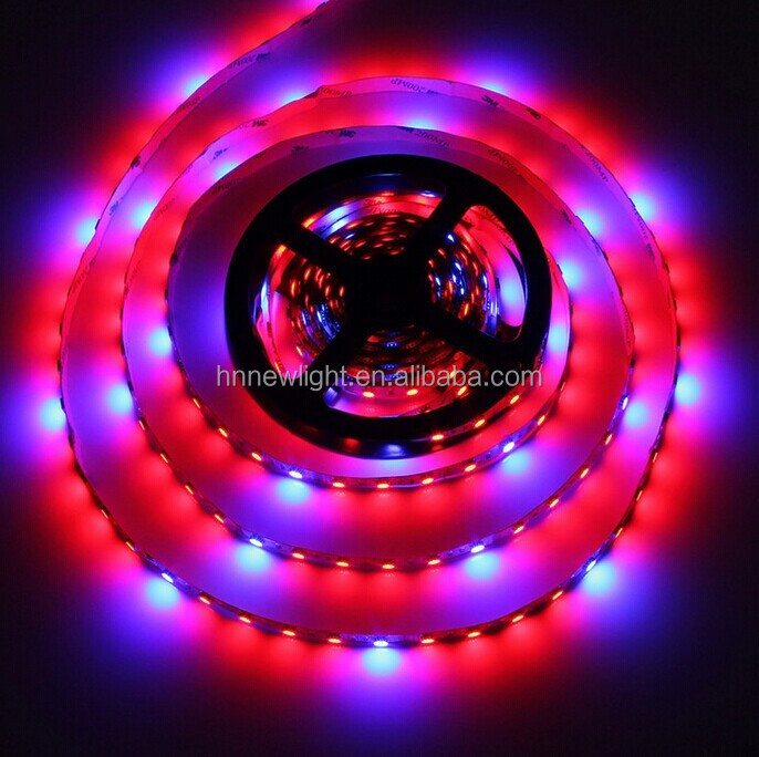 china factory supplier waterproof rgb led strip growth light with dc12v red and blue color