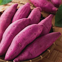 Color Value: E80 Purple Sweet Potato Red Pigment