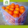 Brand new best quality with low price mandarin