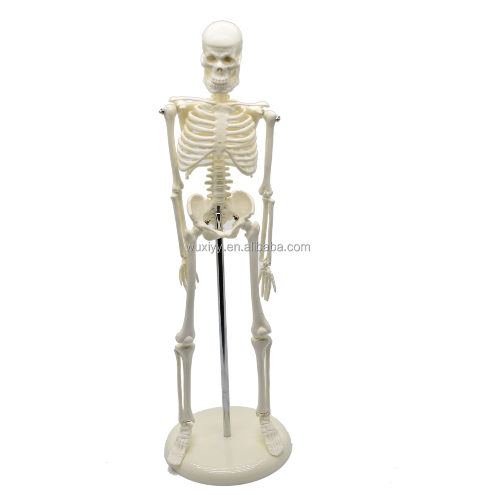 Cheap Plastic Skeletons Wholesale, Skeletons Suppliers - Alibaba