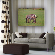 Zebra wild animal home decortion modern chinese wall canvas art painting