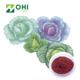 High Quality organic green Vitamin U Dried Natural Pigment kale Cabbage Leaves Extract Powder