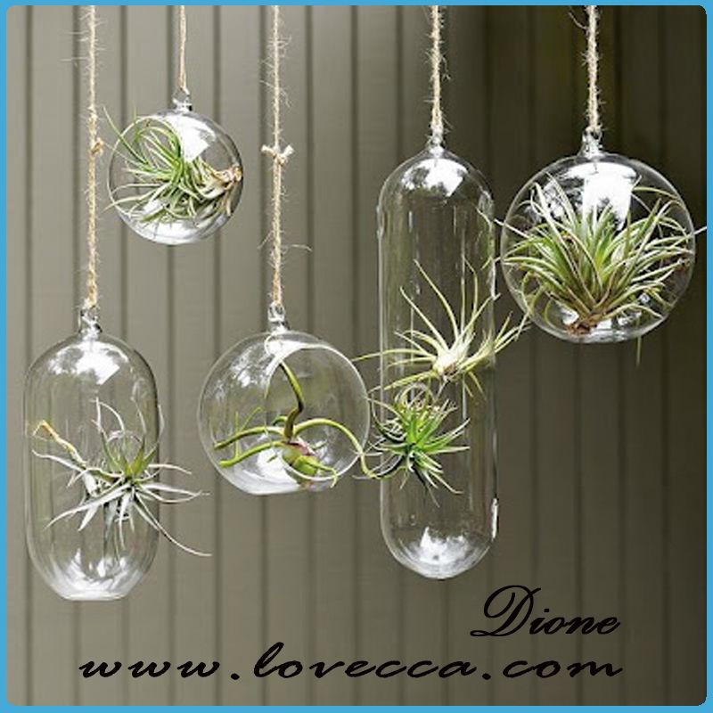 Sha Air Plant Terrarium Hanging Glass Globe Air Plants