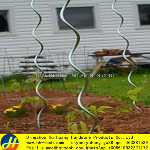 metal for binding plants spirals tomatoes processing plant garden supports