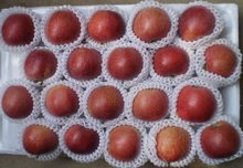 2012 New Fresh Red Star Apple