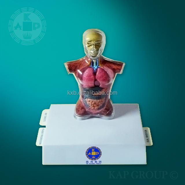 Promoción digestivo modelo, Compras online de digestivo modelo ...