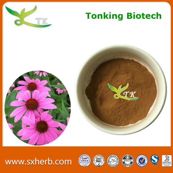 High quality echinacea root extract powder
