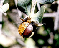 Certified 100% Pure n Natural Organic Jojoba oil in your own brand