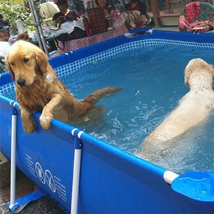 PVC Dog Swimming Pools Inflatable Rectangular Swimming Pool