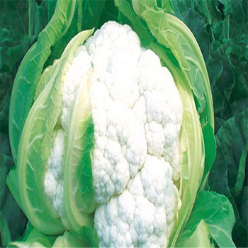 Hua Ye Cai Zhong Zi White Flower Vegetable Seed For Sale Hybrid