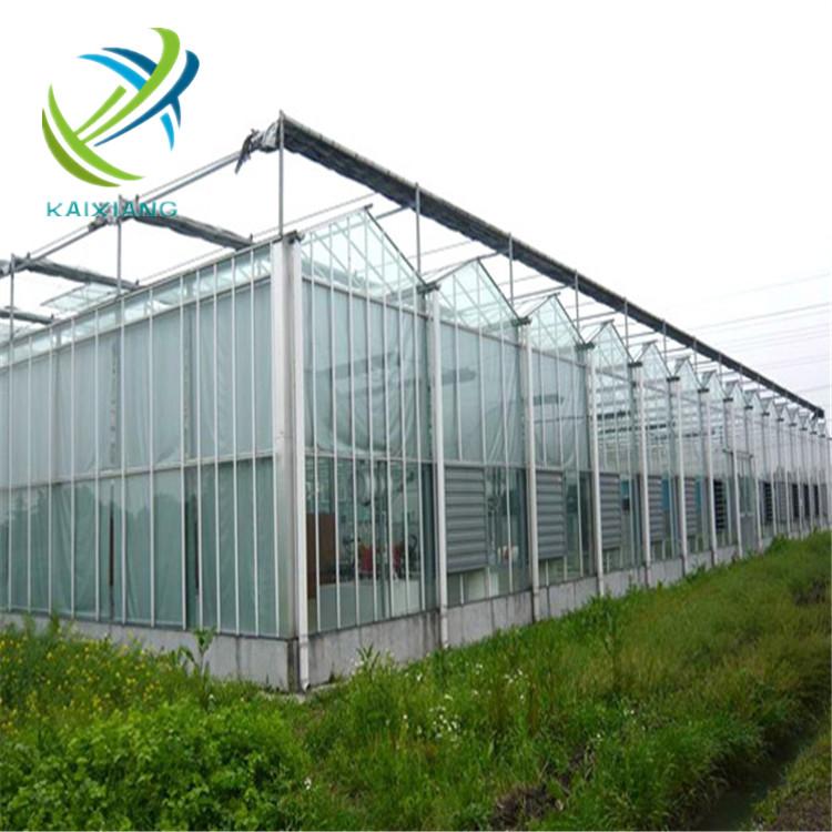 Kaixiang Venlo Gewächshaus Aus Glas Für Tomatenanbau - Buy  Gewächshäuser,Glas Gewächshäuser,Kaixaing Gewächshaus Product on Alibaba.com