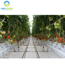Agricultural Hydroponic System Tomato Greenhouse