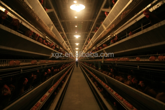 cheap advanced automated chicken farm supplies