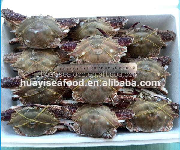 favourful fresh frozen whole round swimming crab Chinese supplier