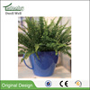 small outdoor ecotic flower pots