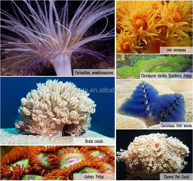 Programmble S400 Led Aquarium Light 60inch 1.5m For Coral Reef ...