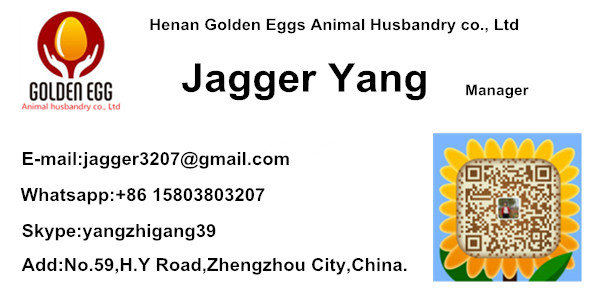 5 Tiers H Type Egg Chicken Cage With Feeder 320 Birds Factory Direct Supply  For Pakistan Poultry Farm - Buy High Quality Egg Chicken Cage With