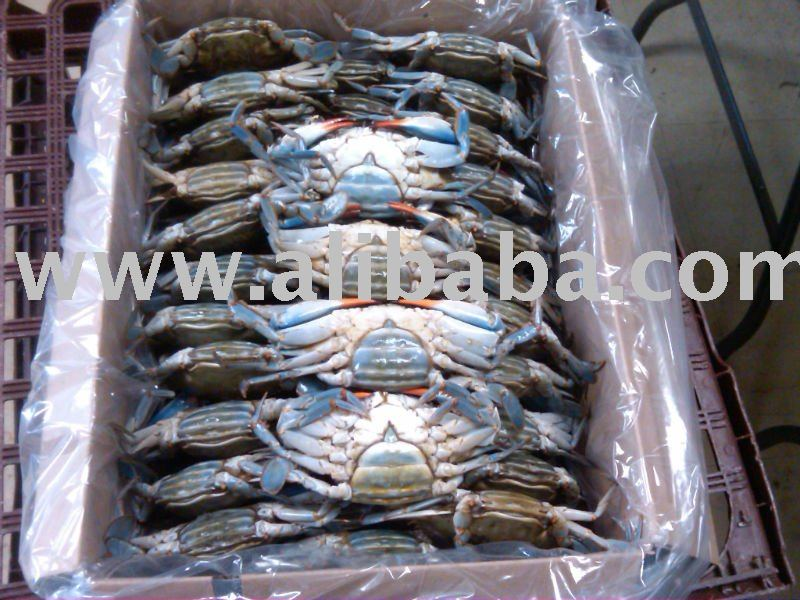 Frozen Female Blue Crab with Egg/Roe