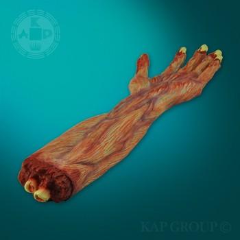 Real Skin Pvc Human Anatomy Palm Muscle Model Buy Anatomy Palm